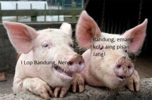 pigs-at-play-in_bandung